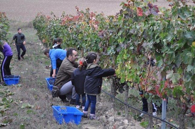 Niños vendimiando en el campo