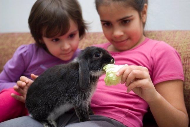 Cómo cuidar un animal exótico en casa