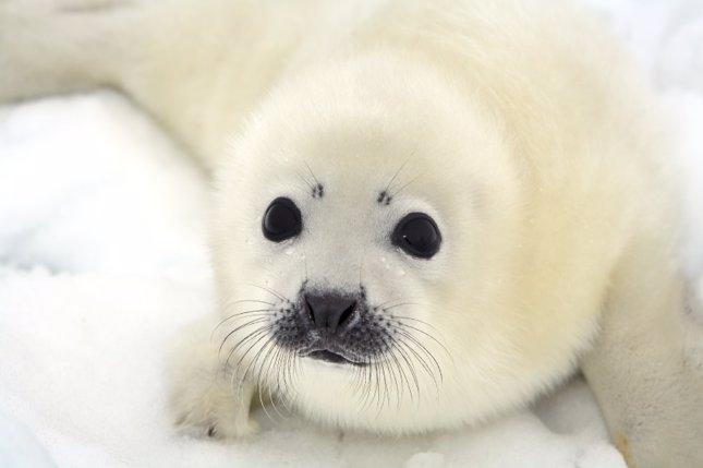 Nukka, la foca robótica que ayuda a niños con autismo
