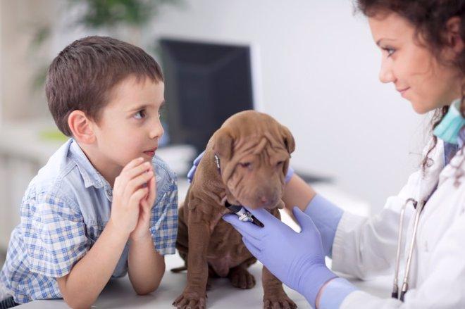 Mascotas: dudas de los padres