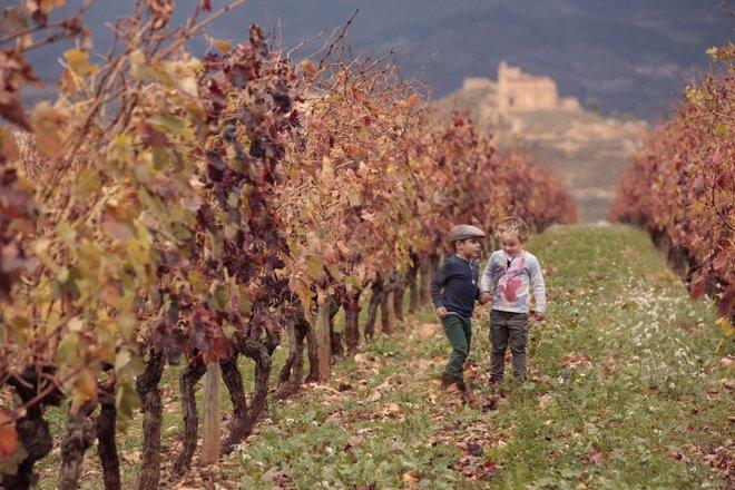 Sentir el viñedo, una experiencia para los niños
